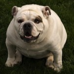 obesity prevention in dogs