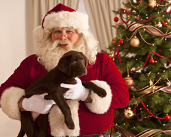 Keep your pets safe and have a great Christmas!