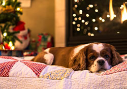 Christmas can be a hazardous time of year for pets