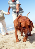 Physiotherapy for dogs with arthritis can help them to be more active and more comfortable