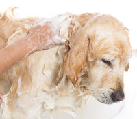 Management of Atopic Dermatitis in Dogs and Cats