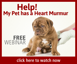 heart murmurs in dogs and cats explained. Free webinar