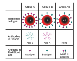 Cat blood groups