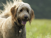 There are a number of options for managing chronic kidney disease in dogs