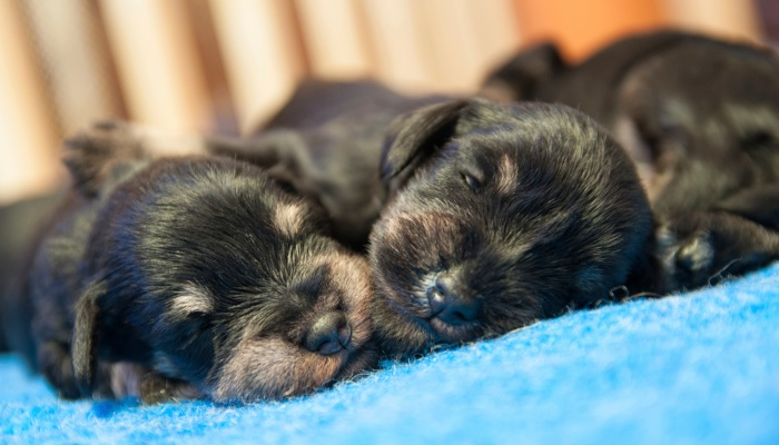 What is Normal for a Newborn PuppyThe Veterinary Expert| Pet Health