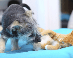 Fighting like cats and dogs!  eye scratch injuries are most common in puppies