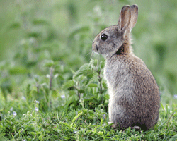 Wild rabbits eat mostly grass and leaves. So what is the best diet to feed your pet rabbit?