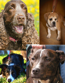 Breed is not a reliable predictor of whether a dog will use aggression alone