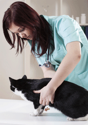Regular check ups with your vet are important as your cat gets older