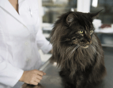 Your vet will be able to discuss the long term prognosis for your cat with you