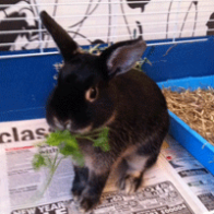 There are lots of nutritious treat foods available for pet rabbits for no or very little cost