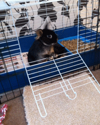 There are lots of ways of preventing boredom in pet rabbits, with minimal financial expenditure