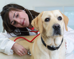Before an anaesthetic your vet will fully examine your pet