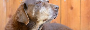 physiotherapy for older dogs