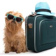 taking you pet abroad image