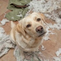 destructive dogs